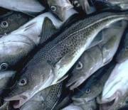 Морски и сладководни риби
